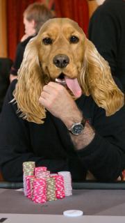 Rex Dogman